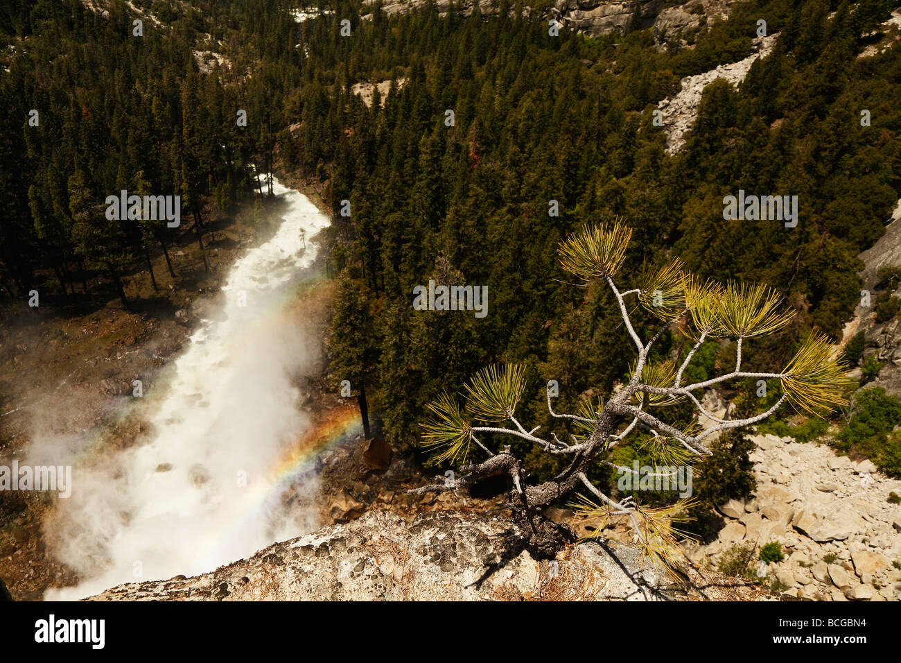 Pine sapling Yosemite river with rainbows - Stock Image