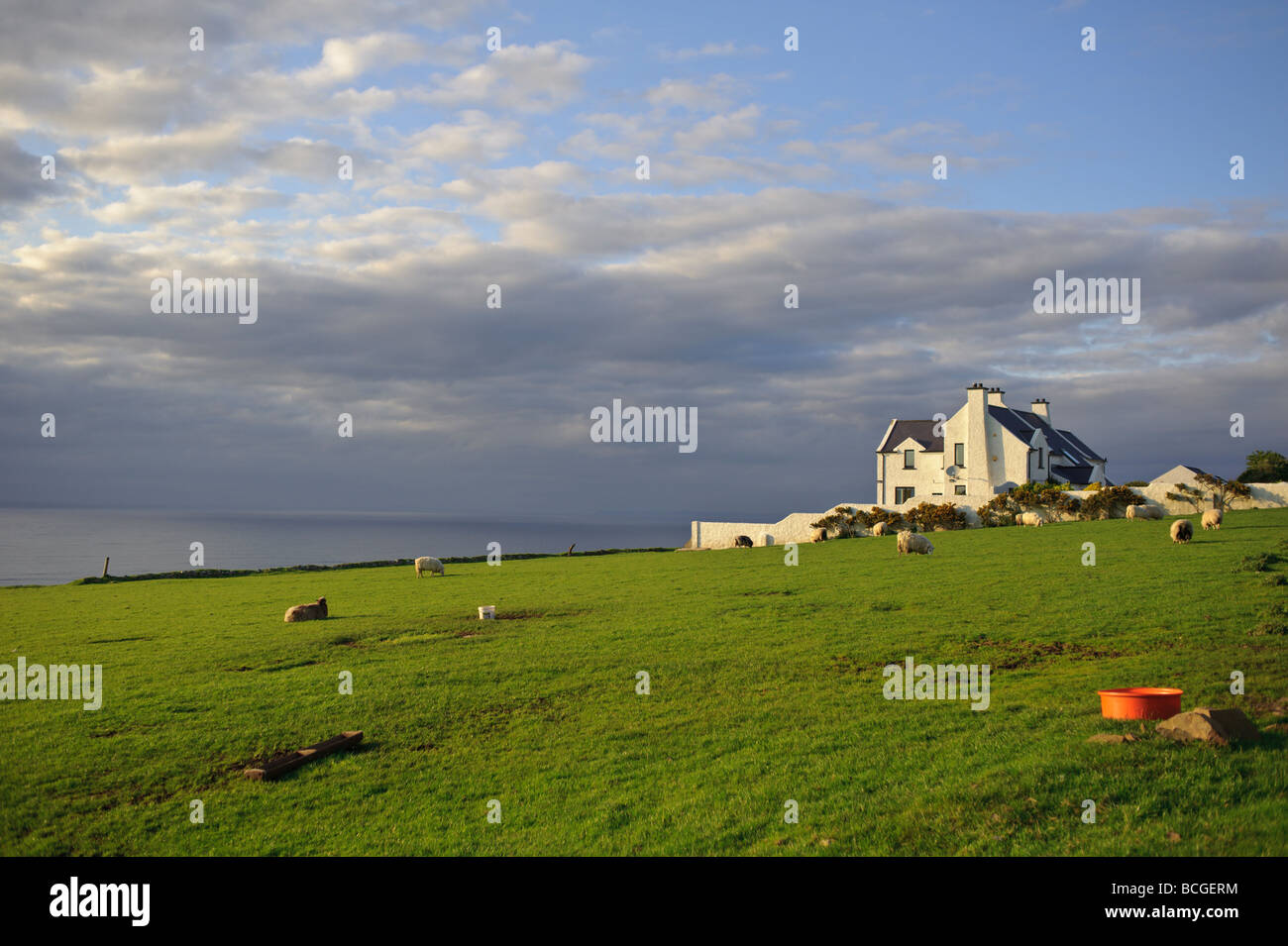 House and sheep and cliffs on the Giant s Causeway coastal drive in Northern Ireland sunset - Stock Image