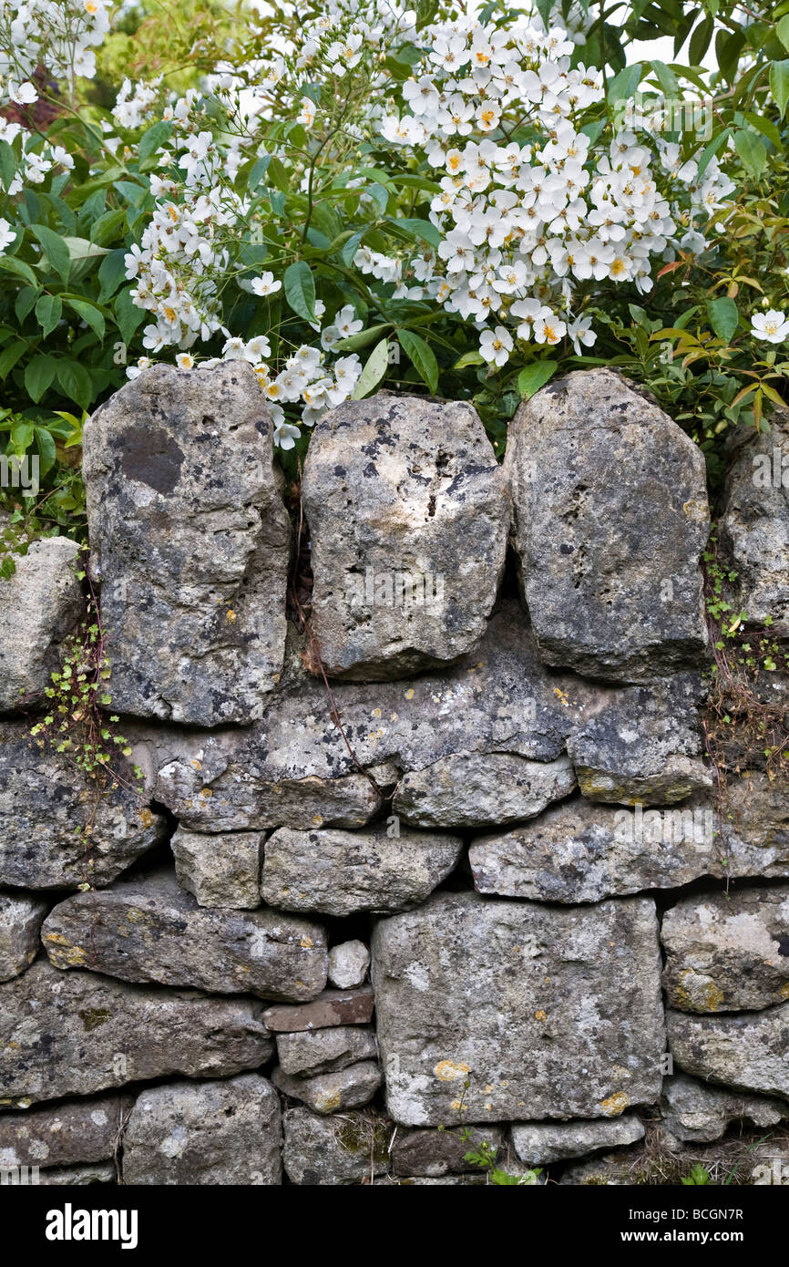 TRADITIONAL DRY STONE WALL BUT WITH CEMENT TOPPED STONES IN WILTSHIRE ENGLAND BRITAIN UK - Stock Image