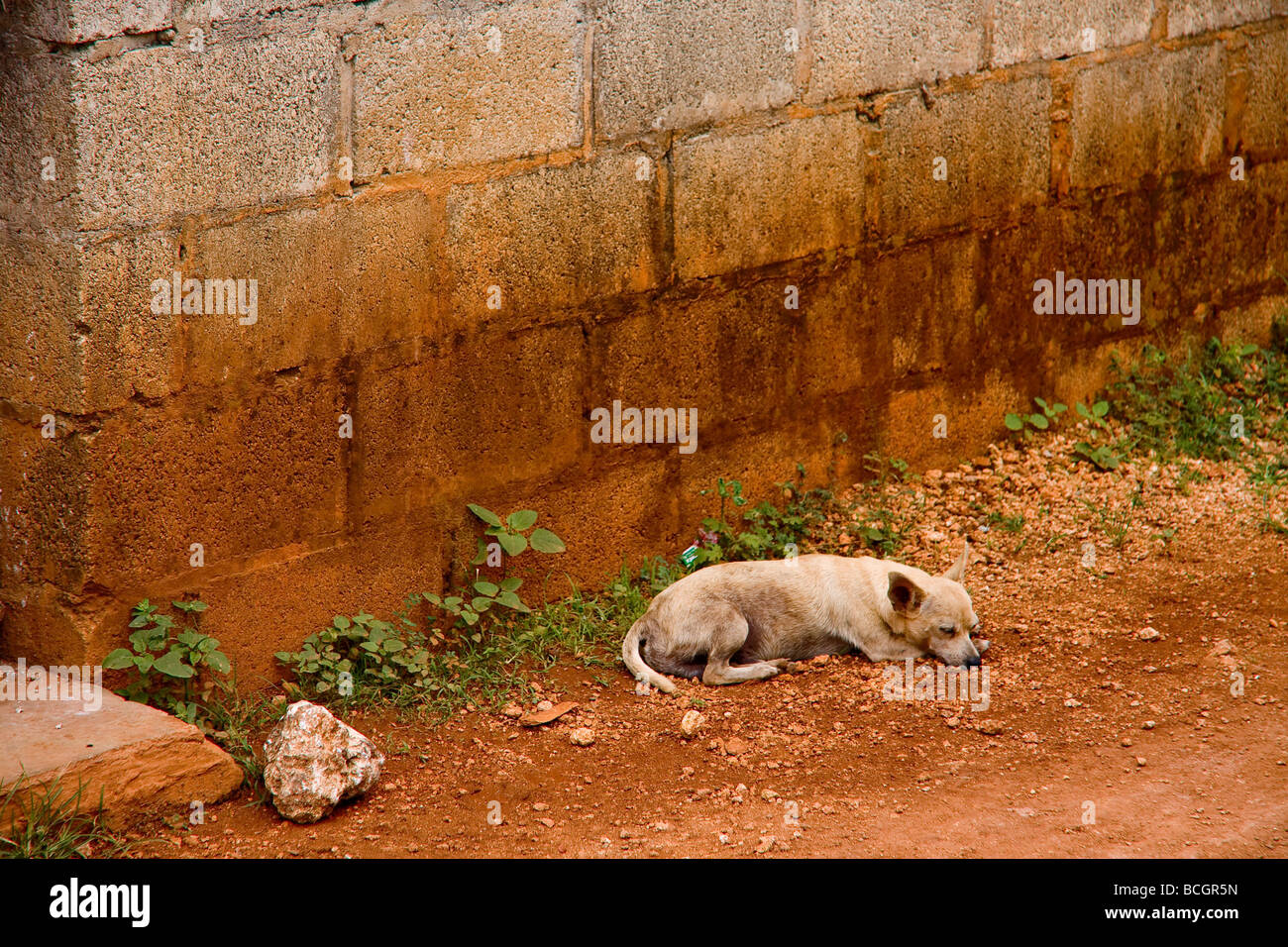 A dog sleeps on the very mineral rich ground by a house in Nagua Dominican Republic - Stock Image