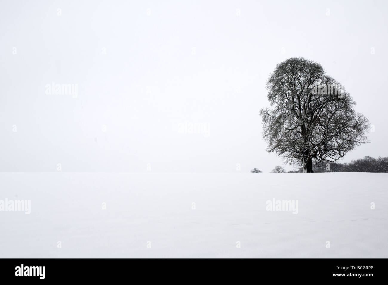tree in snow covered landscape - Stock Image