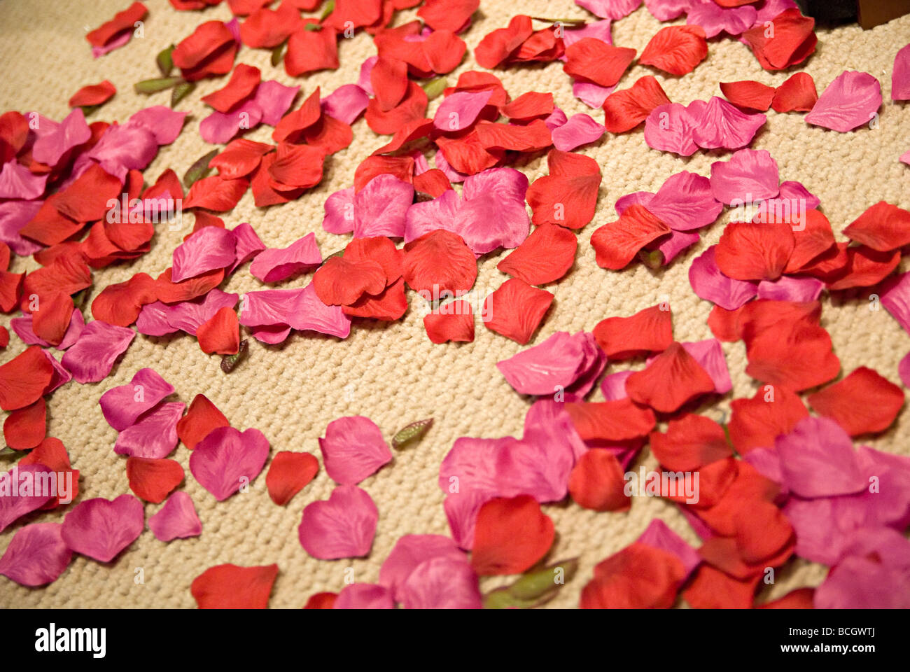 red petals thrown on the floor - Stock Image