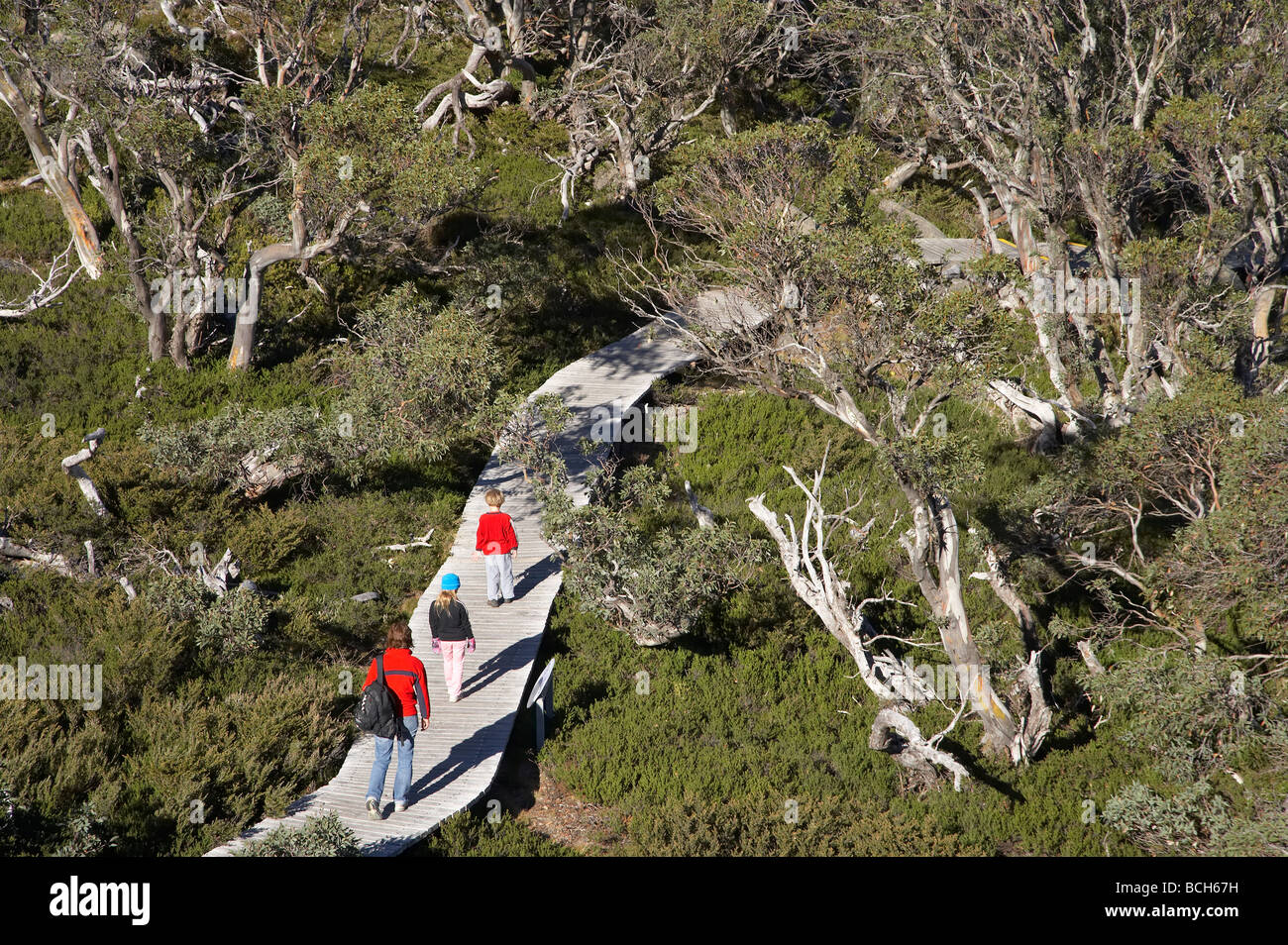 Family on Snow Gums Board Walk Charlotte Pass Kosciuszko National Park Snowy Mountains New South Wales Australia - Stock Image