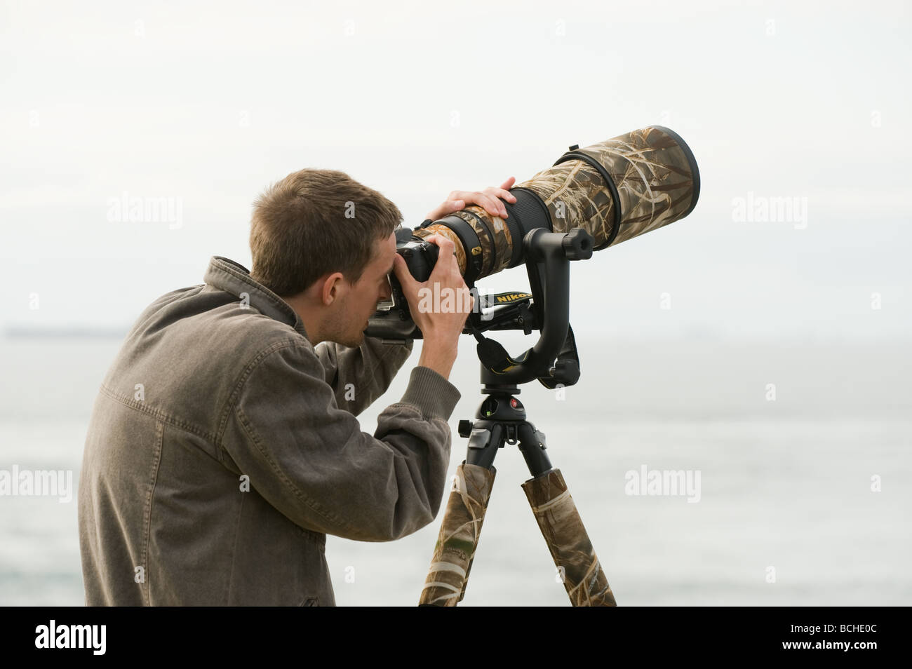 Nature photographer Peter Moonlight with super-telephoto lens photographing birds in fight on the Pembrokeshire - Stock Image
