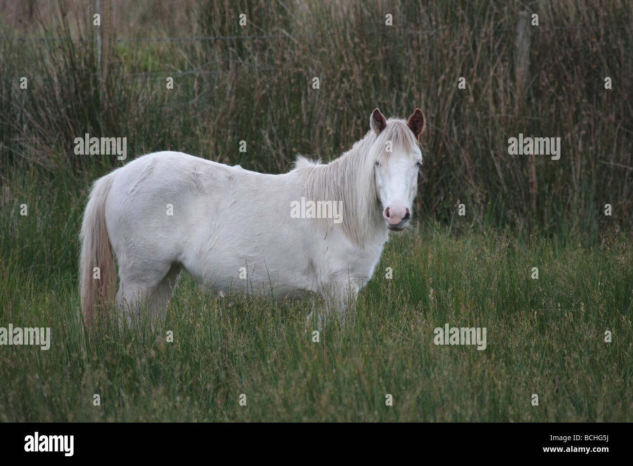 Irish Pony on upland pasture. - Stock Image