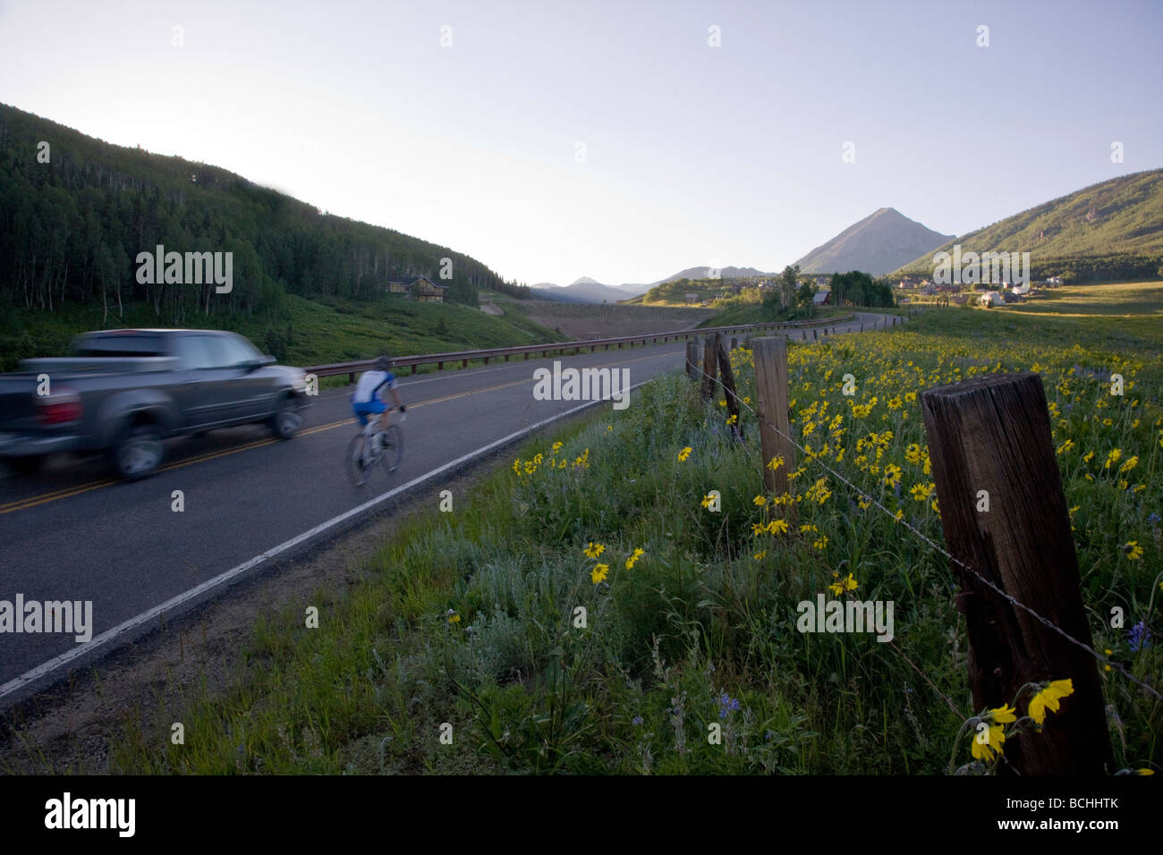 Wildflowers grow along Washington Gulch near Mount Crested Butte Colorado USA - Stock Image