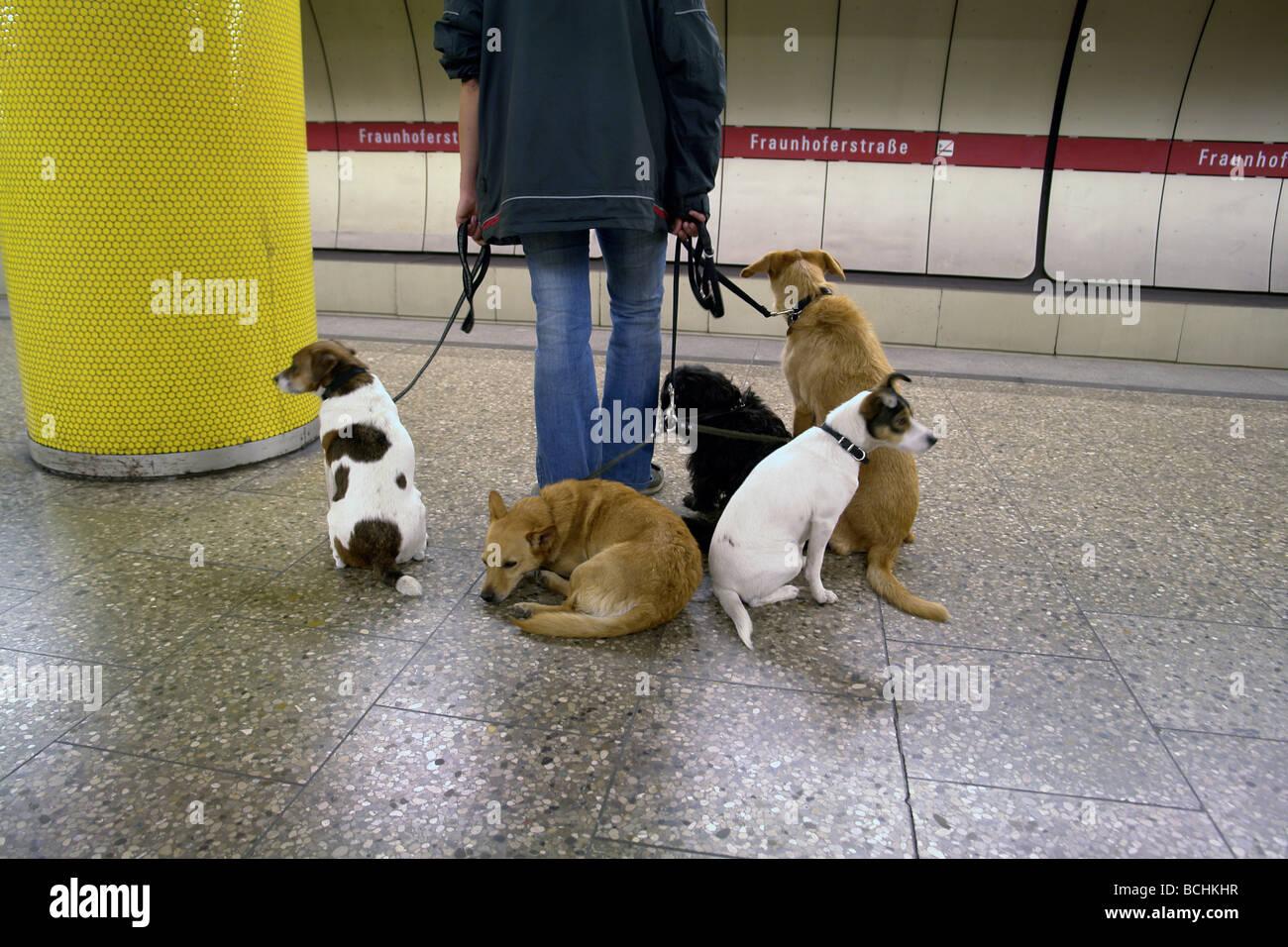 Dog Walking In Munich