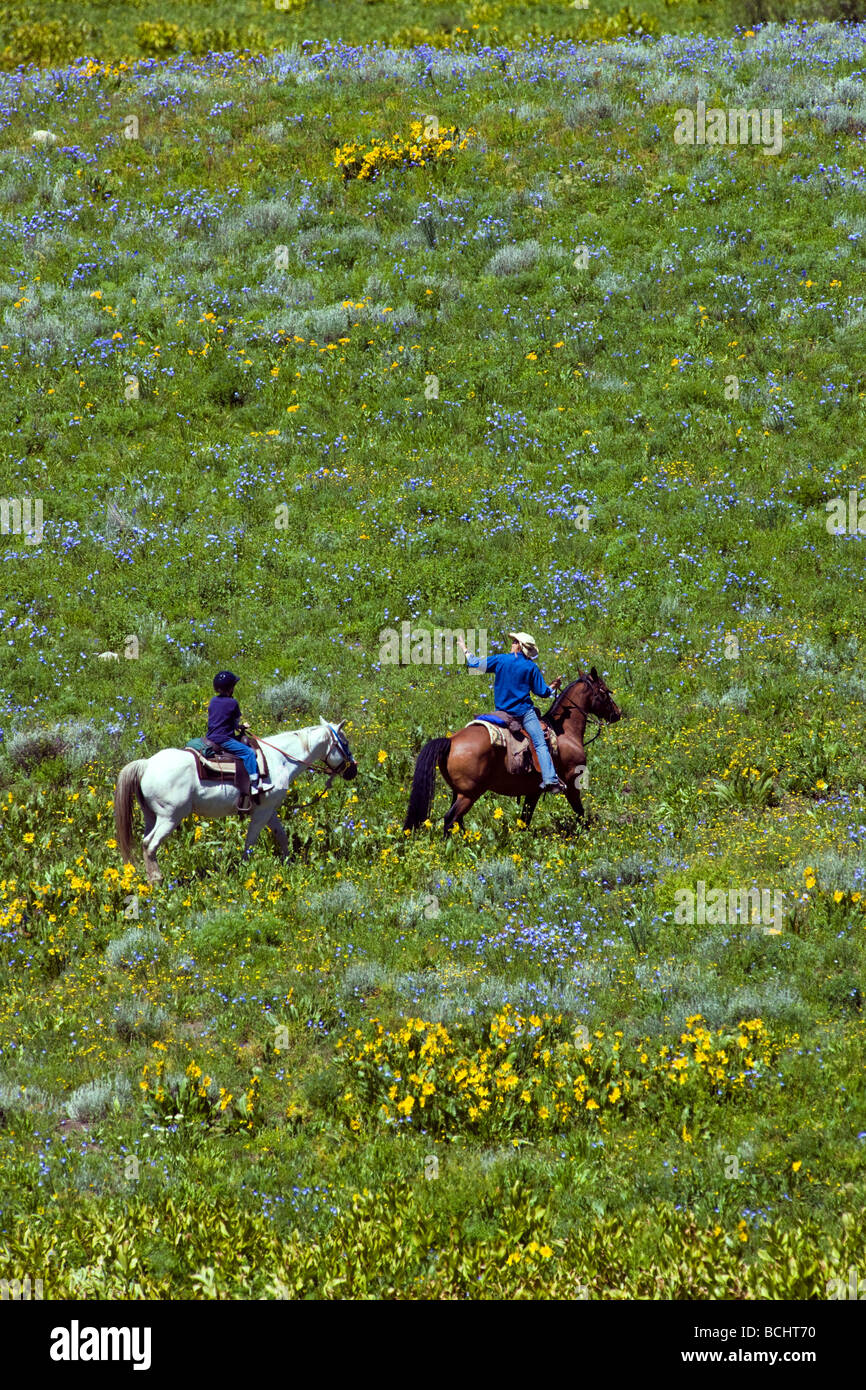 Tourists head out on a trail ride on horseback below Snodgrass Mountain Mount Crested Butte Colorado USA - Stock Image