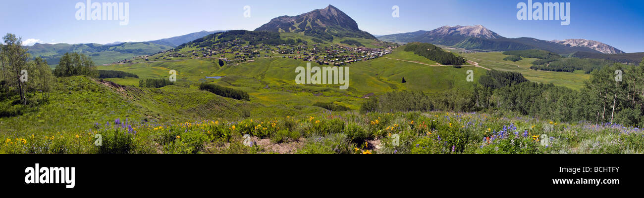 Wildflowers including Mule Ears Sunflower family and Blue Flax near Mount Crested Butte Colorado USA - Stock Image