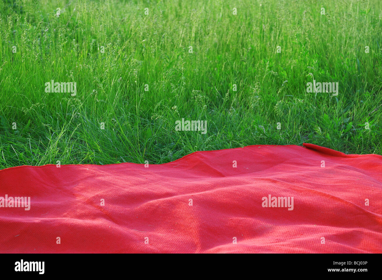 Summer field as resting place - Stock Image