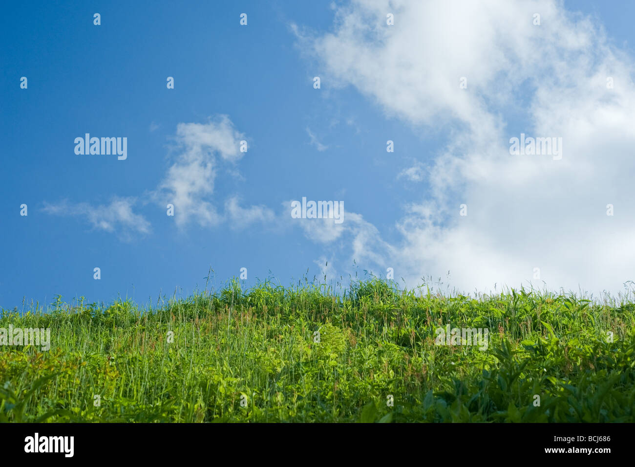beutiful meadow reaching to the sky with white clouds and blue skies - Stock Image