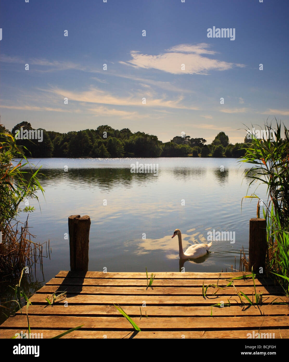 Swan and jetty. Haysden country park Tonbridge. - Stock Image