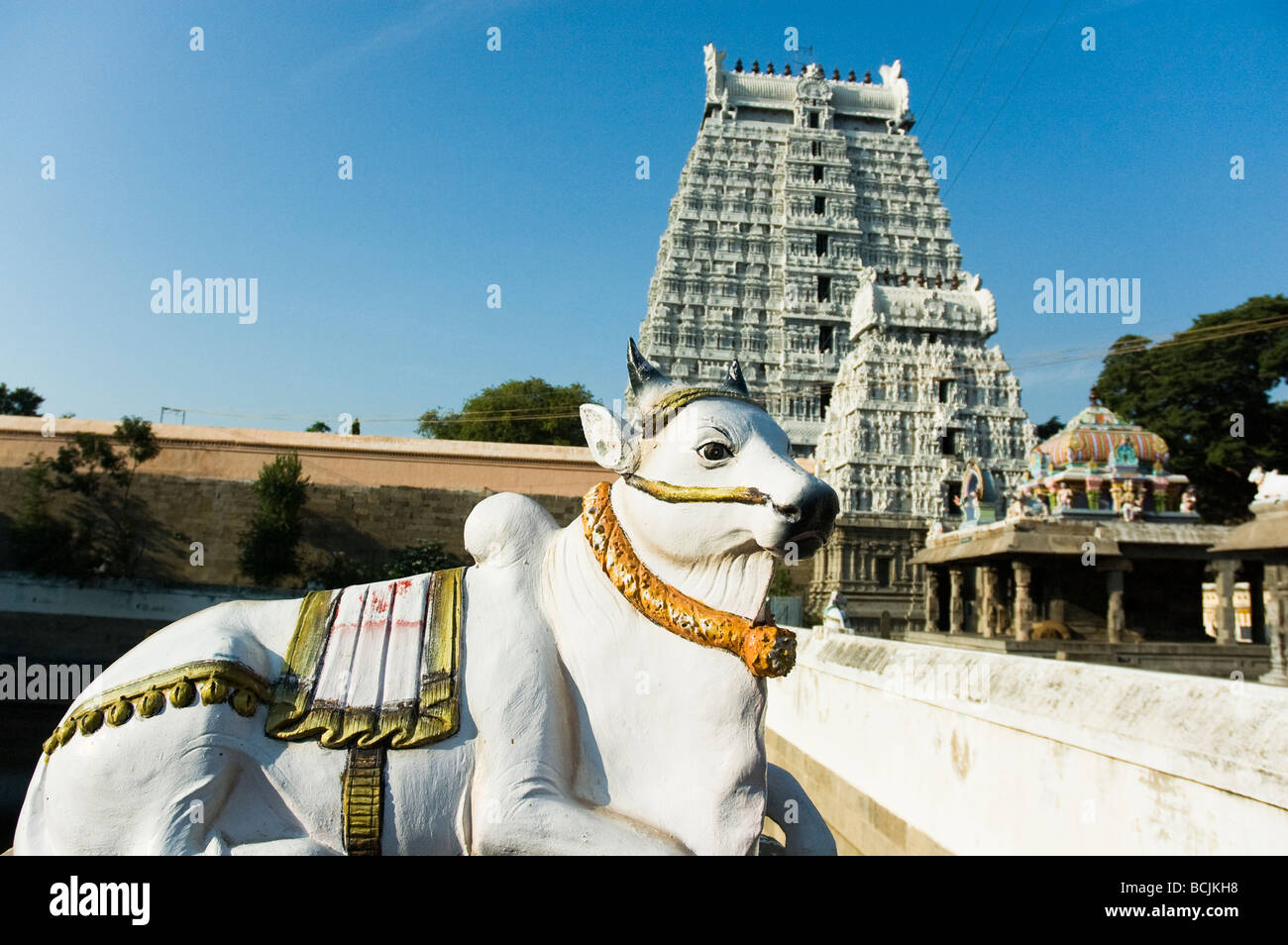 A statue of a cow with a gopura in behind at the Arunachula temple (dedicated to Shiva) in Tiruvannamalai, Tamil - Stock Image
