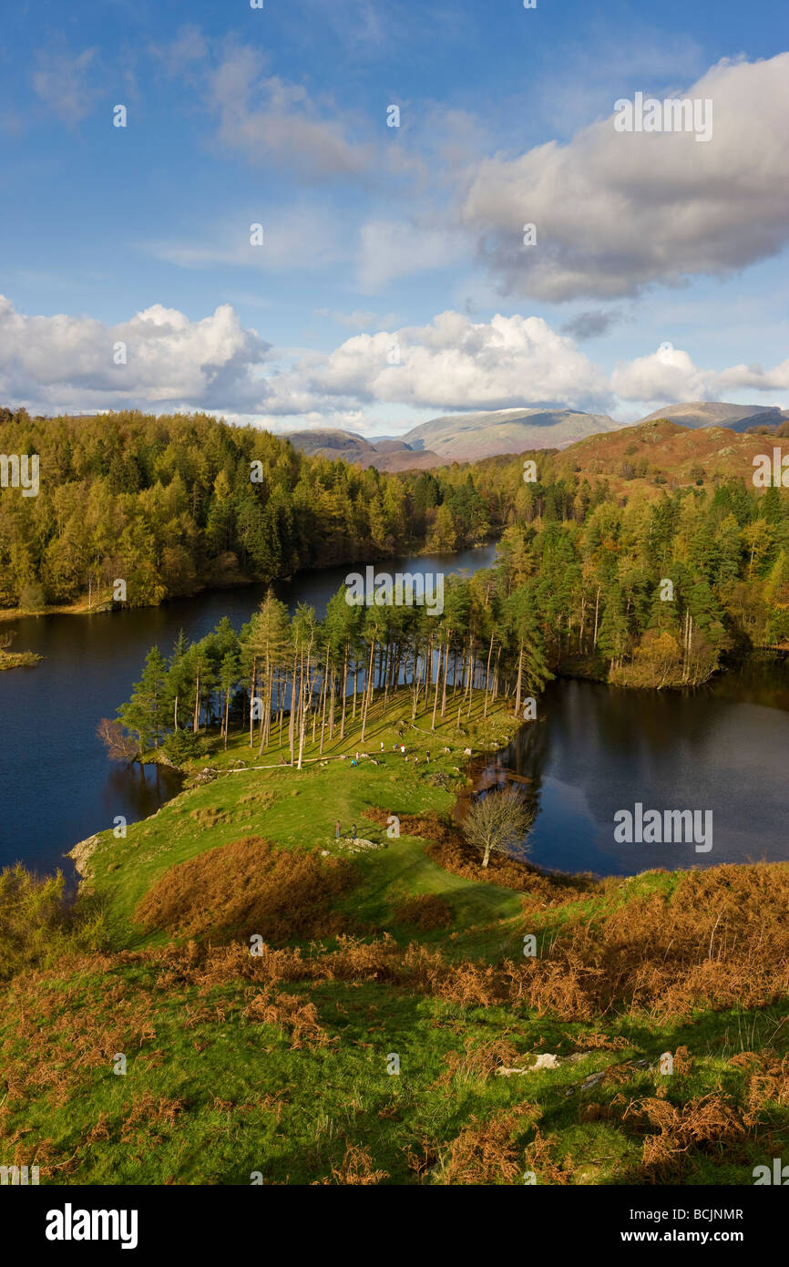 Autumn colours at Tarn Hows near Hawkshead, Lake District, Cumbria, England, UK - Stock Image