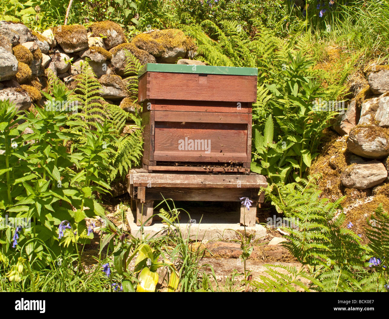 Beehive sheltered by stone wall in Scotland UK - Stock Image