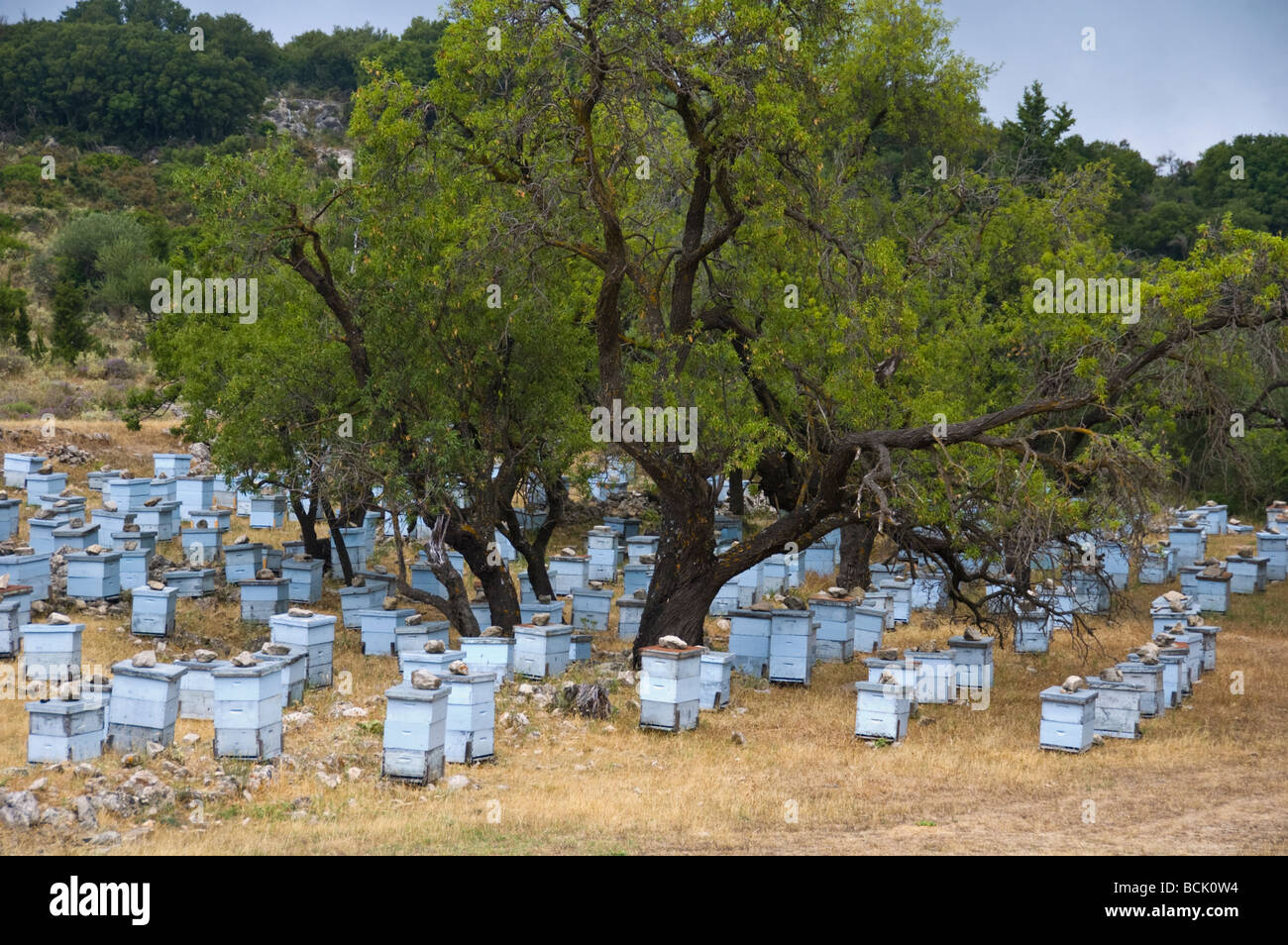 Group of blue beehives on mountainside above the village of Assos on the Greek island of Kefalonia Greece GR - Stock Image