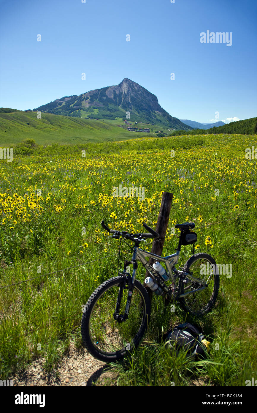 Bicycle leaning on a fence post Mules Ear Aspen Sunflowers below Snodgrass Mountain near Crested Butte Colorado - Stock Image