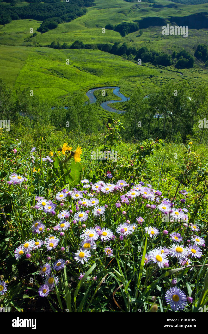View east from Gothic Road towards the East River Valley Daisy Sunflower Family in foreground NW of Mount Crested - Stock Image