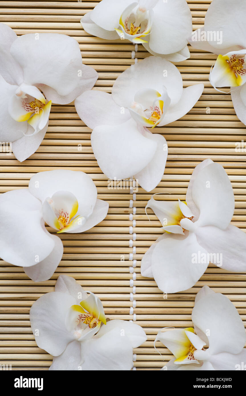 Orchid flowers - Stock Image