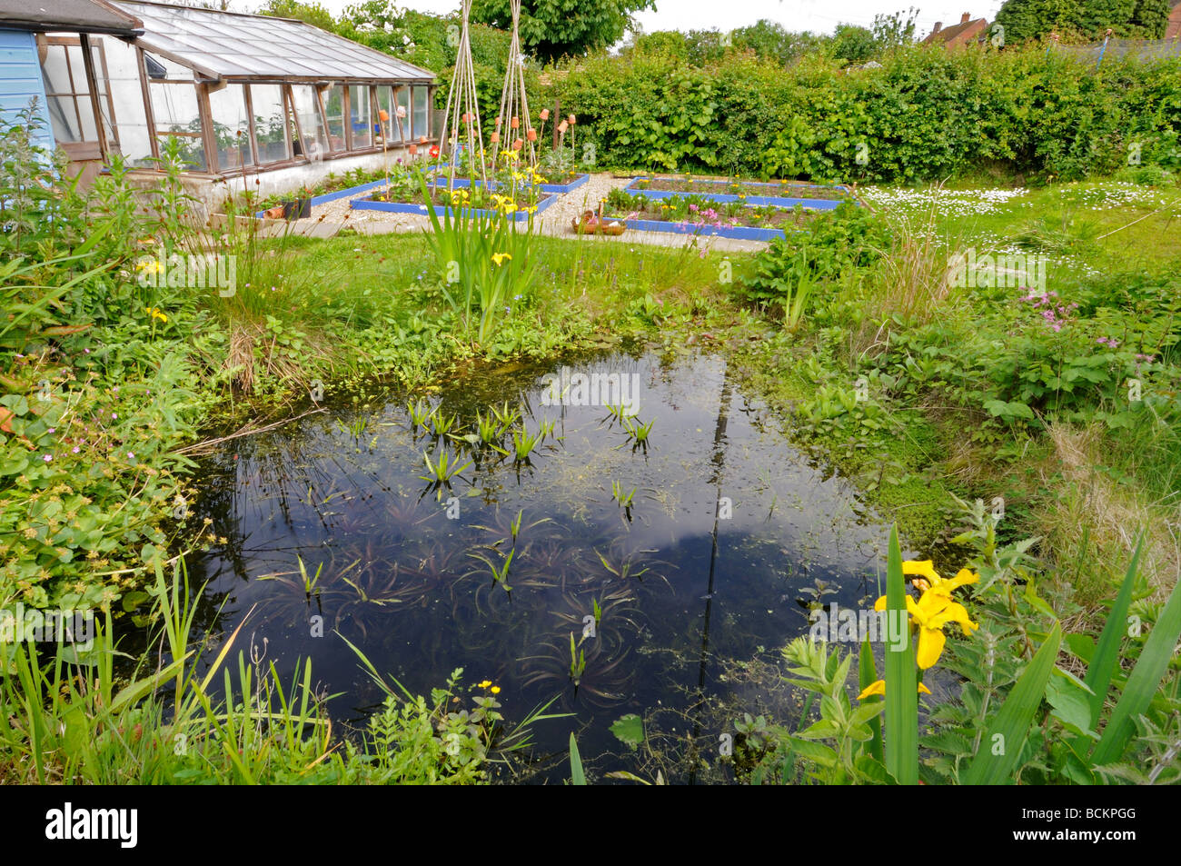 Small Urban Garden With Wildlife Pond And Raised Vegetable Beds And