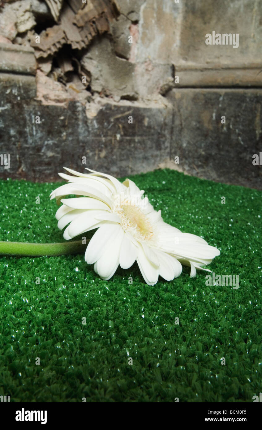 Flower on artificial turf - Stock Image
