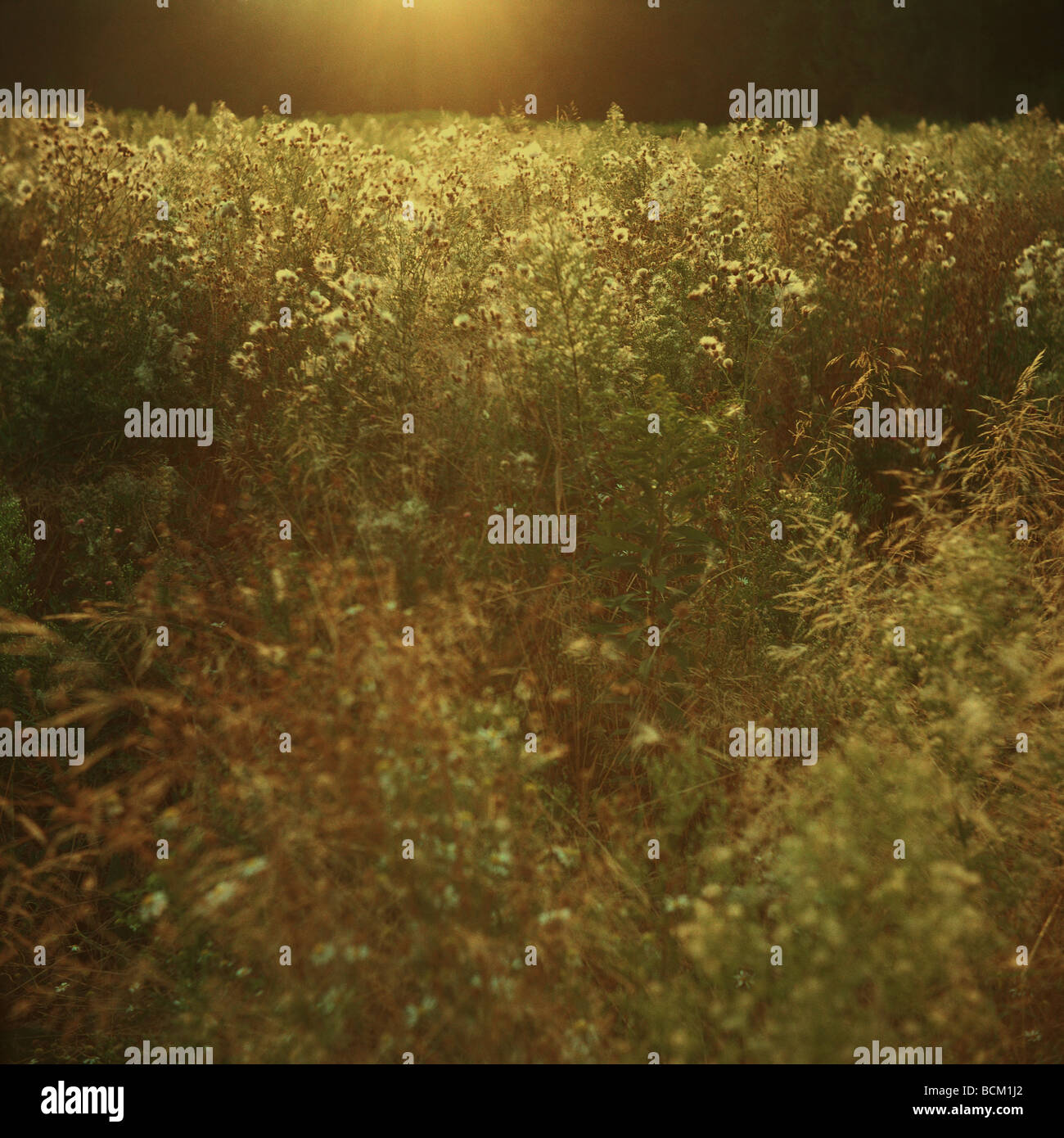 Field with high vegetation - Stock Image