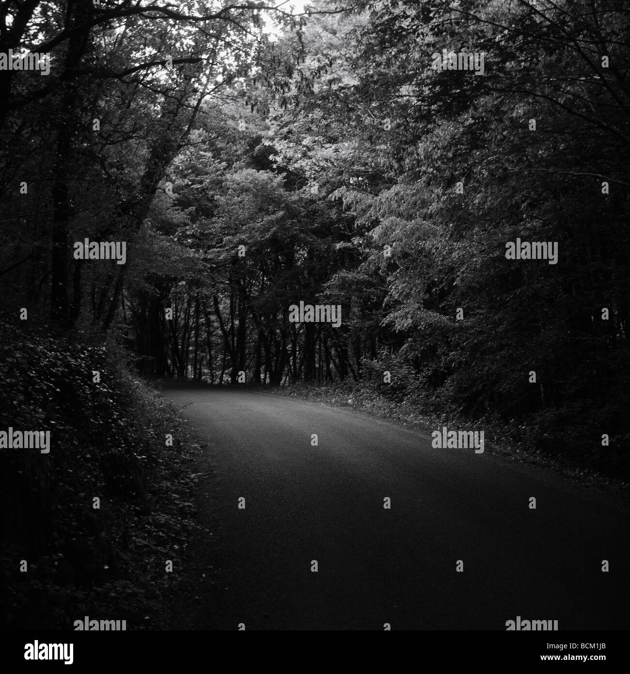 Empty road through woods, black and white - Stock Image