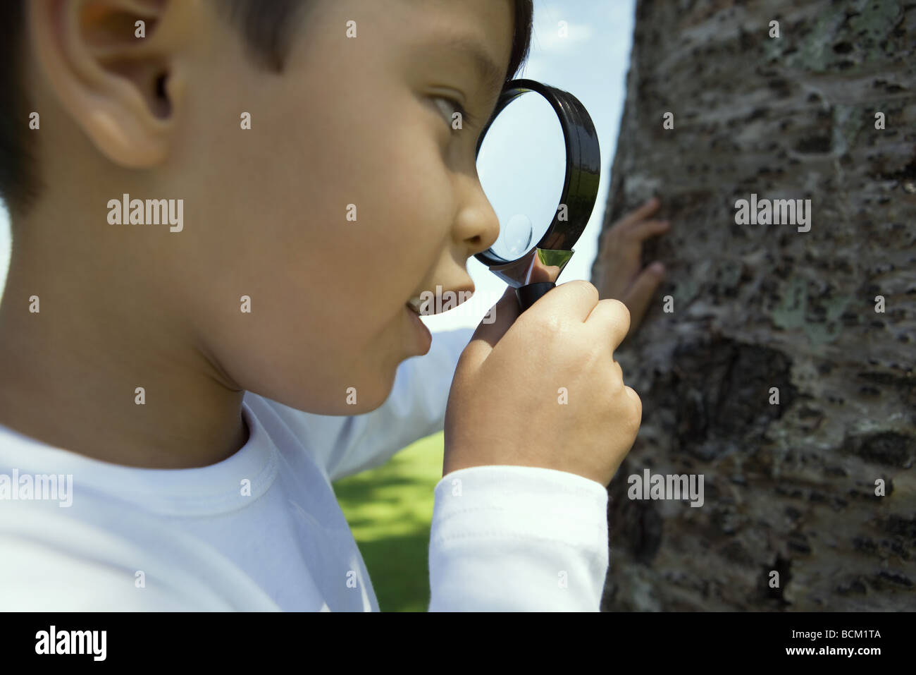 Boy looking at tree through magnifying glass - Stock Image