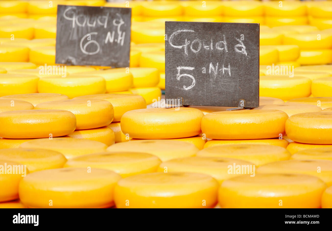 Noord Hollandse Gouda cheese at the Alkmaar Cheesemarket, Alkmaar, North Holland, Netherlands. - Stock Image