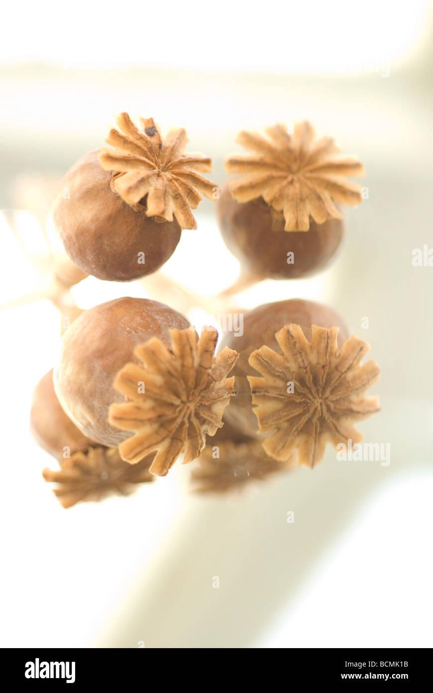 Dry Poppy Flower Head Stock Photos Dry Poppy Flower Head Stock