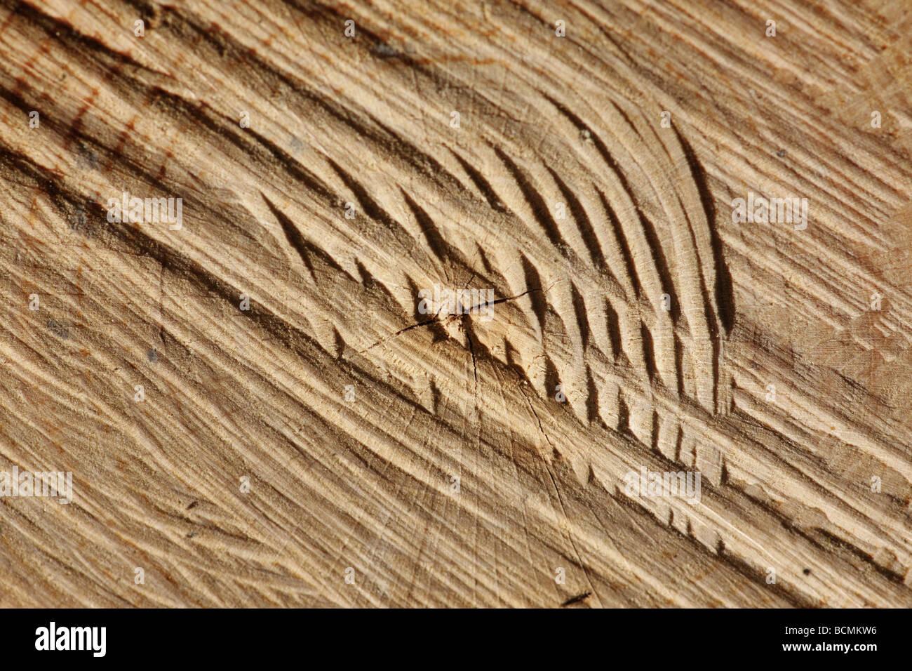 sawed tree - Stock Image