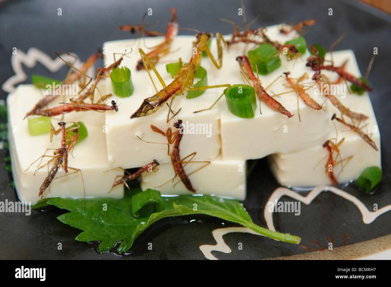 Preying mantis tofu, Tokyo, Japan, 28 October, 2008. - Stock Image