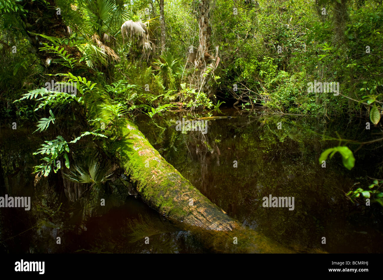 Fakahatchee Strand State Park in the Florida Everglades a World Heritage Site - Stock Image