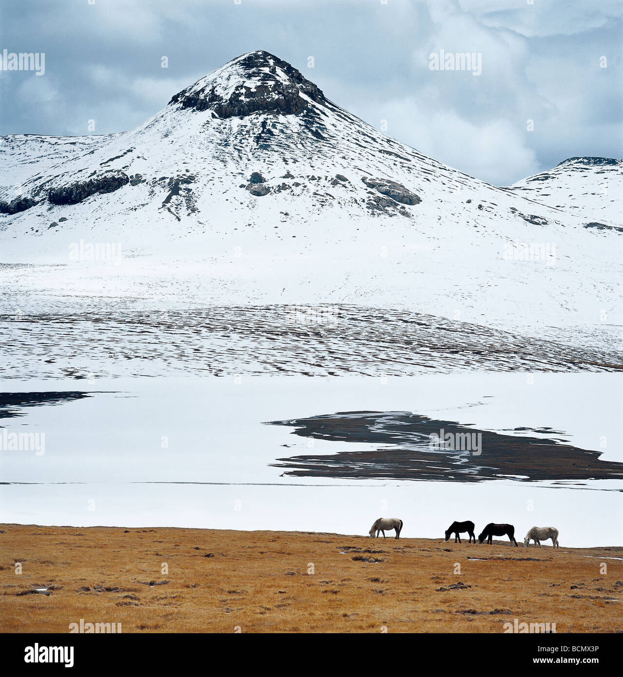 Amdo Grassland in winter, Amdo County, Tibet, China - Stock Image