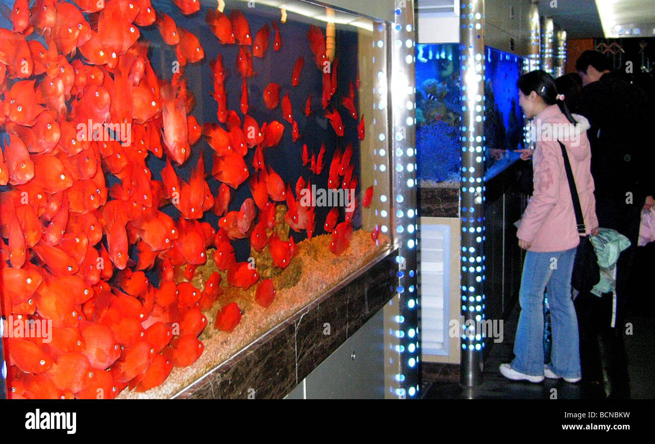 Shoppers looking at delux fish tank with bright colored tropical ...