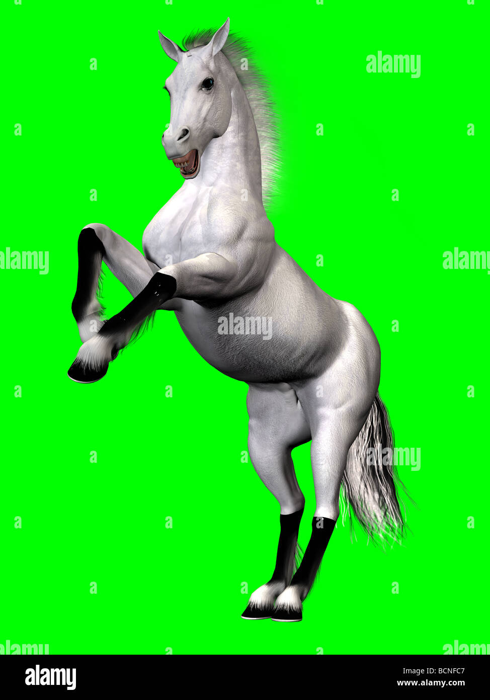A white stallion rearing up in anger, defending itself or its mate. - Stock Image