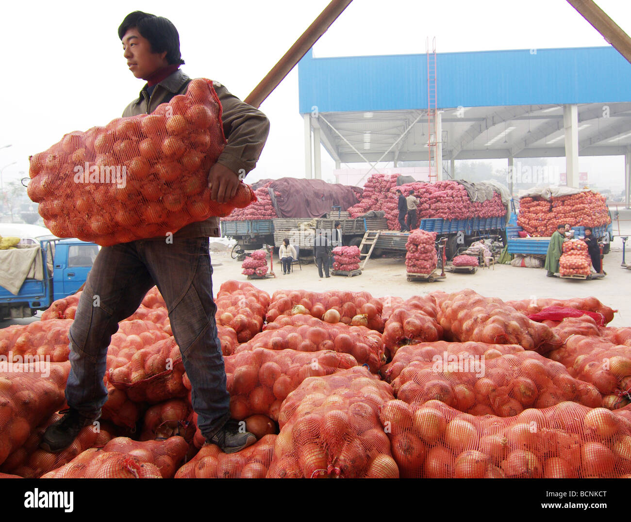 Workers loading bags of onions in a local vegetable distribution center, Beijing, China - Stock Image