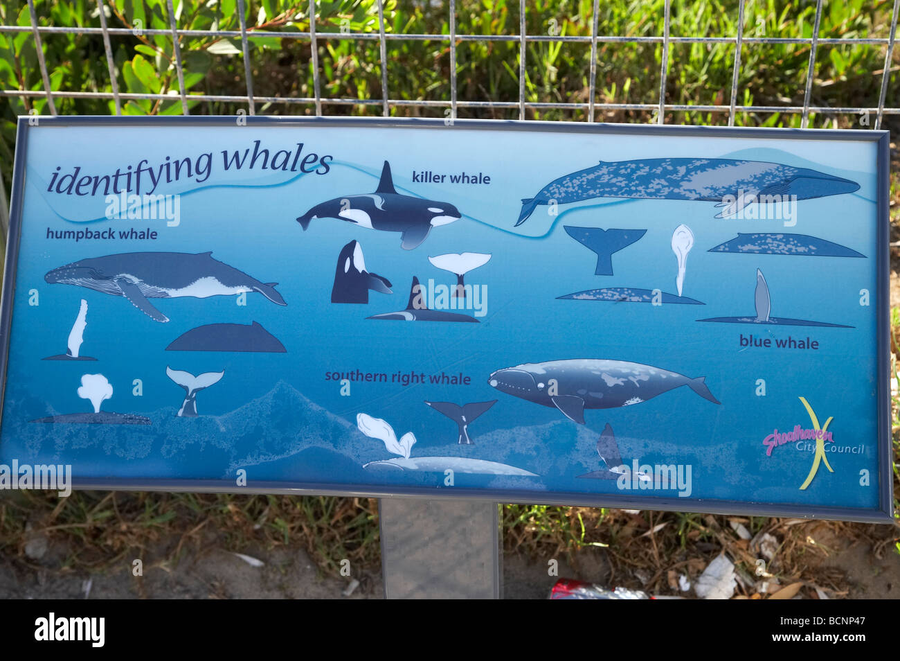 Whale Identification Chart Warden s Head Ulladulla Southern New South Wales Australia - Stock Image