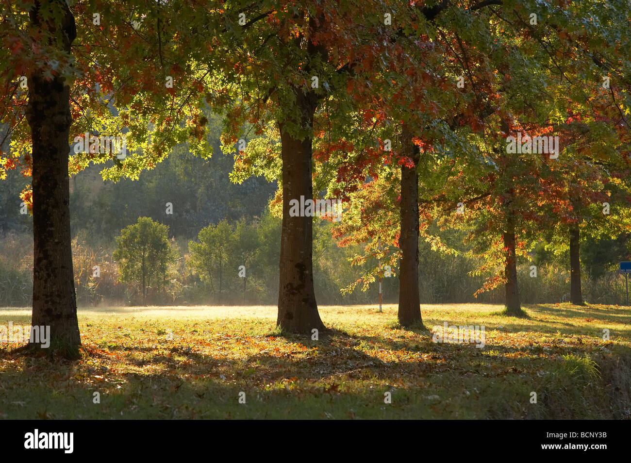 Autumn Trees Khancoban Snowy Mountains Southern New South Wales Australia - Stock Image