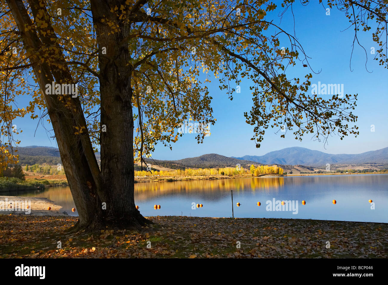 Trees at Boat Harbour Picnic Area Khancoban Pondage and Autumn Colour Snowy Mountains Southern New South Wales Australia - Stock Image