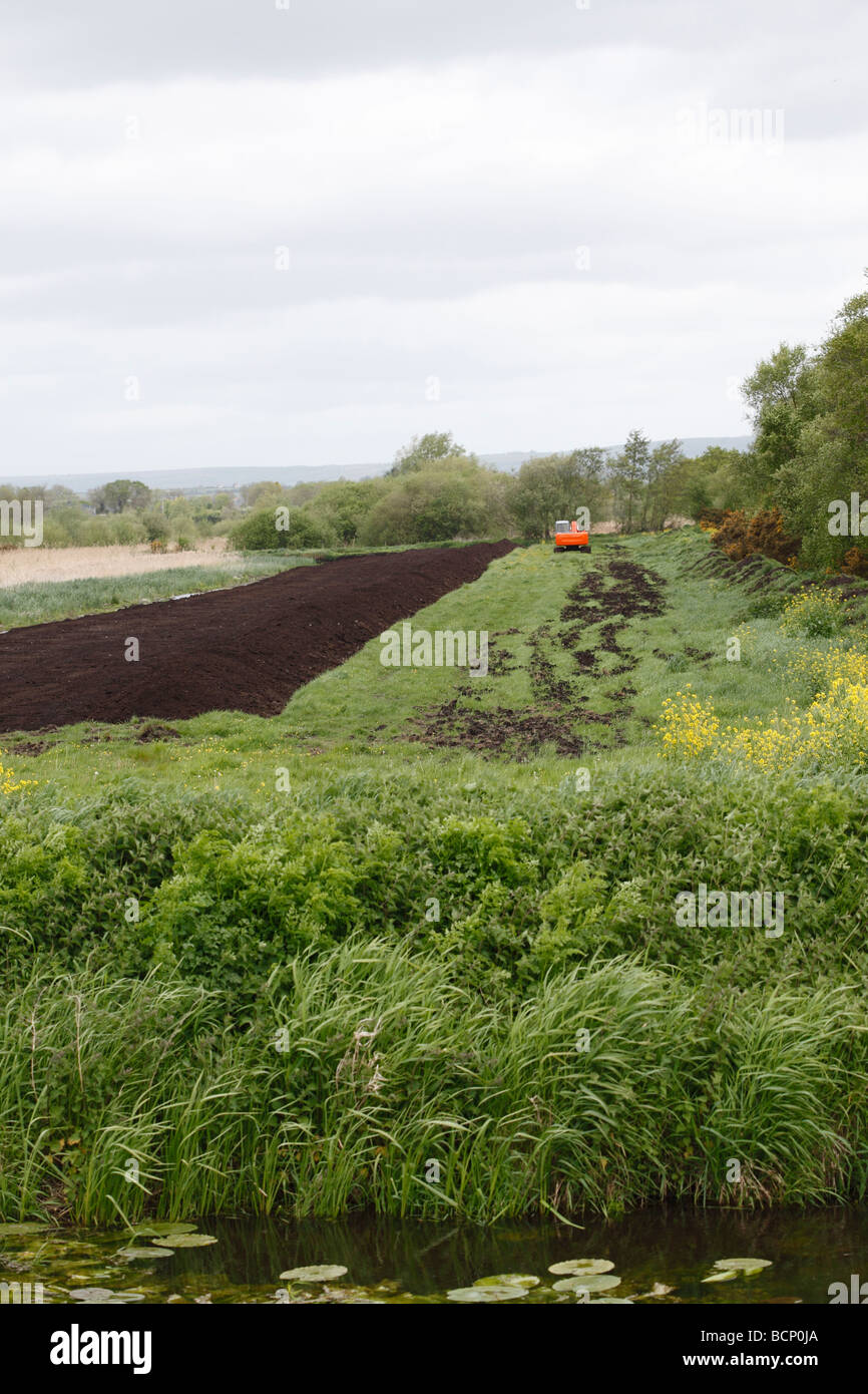 digging peat on somerset levels - Stock Image