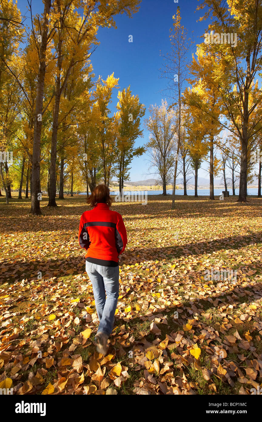 Autumn Trees at Boat Ramp Picnic Area by Khancoban Pondage Snowy Mountains Southern New South Wales Australia Stock Photo