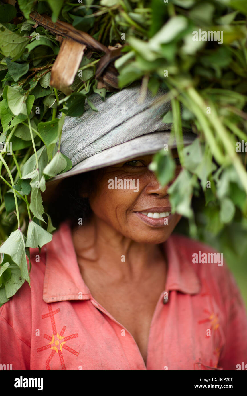 a lady carrying crops on her head, nr Tirtagangga, Bali, Indonesia - Stock Image