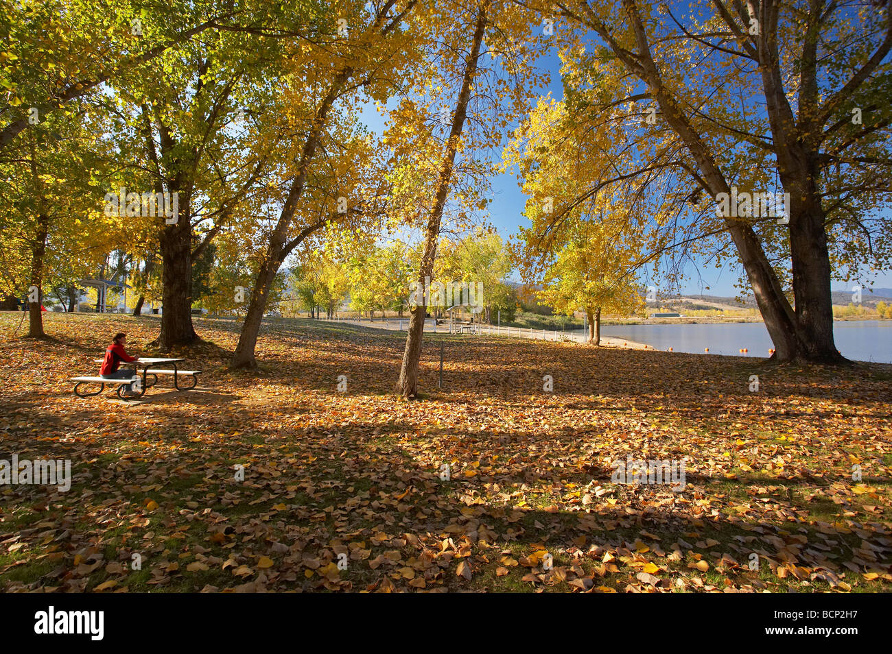 Autumn Trees at Boat Ramp Picnic Area by Khancoban Pondage Snowy Mountains Southern New South Wales Australia - Stock Image