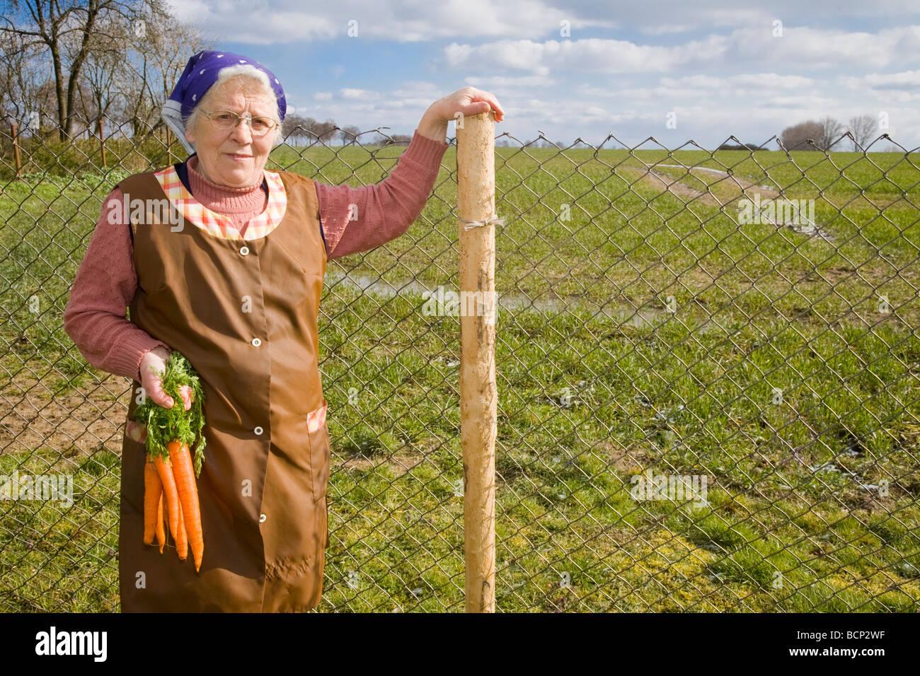 Frau in ihren Siebzigern mit Kopftuch und Schütze steht lächelnd mit einem Bündel Mohrrüben vor einem Feld Stock Photo