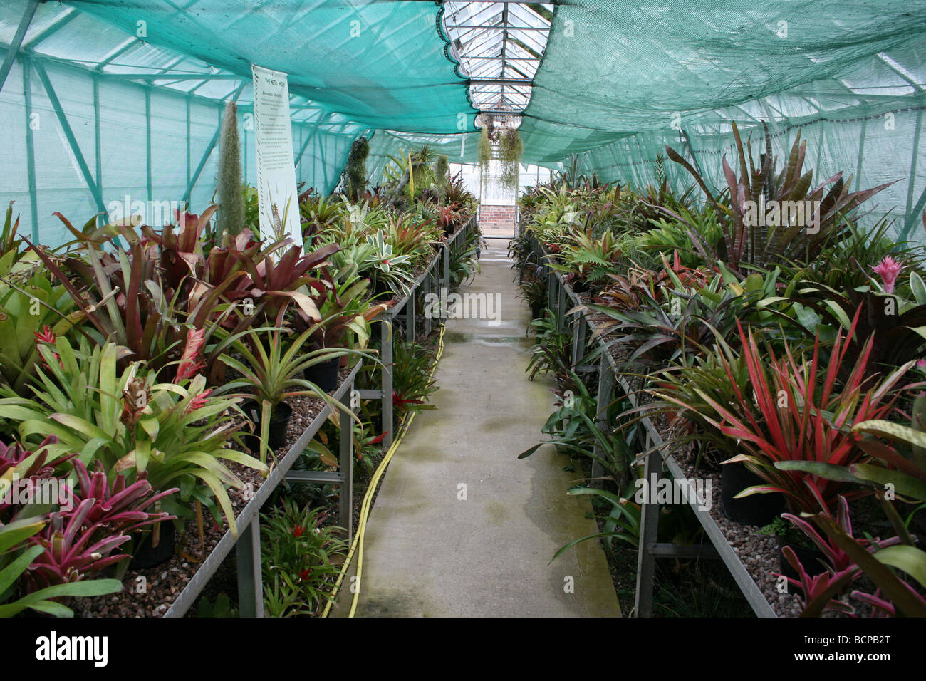 The Bromeliad Greenhouse Collection At Croxteth Hall, Liverpool, England, UK - Stock Image