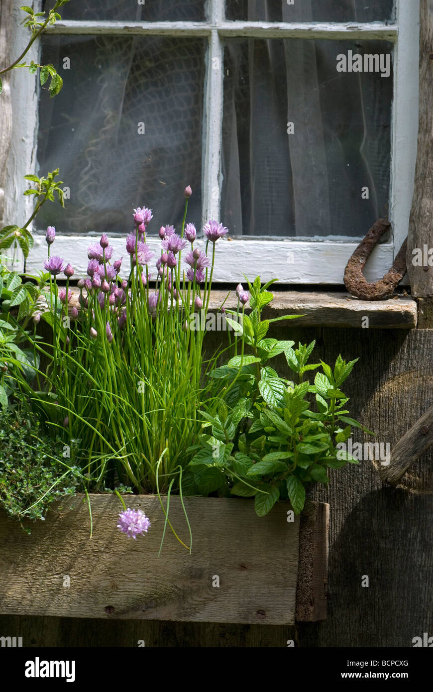 Windowbox with herbs by window - Stock Image