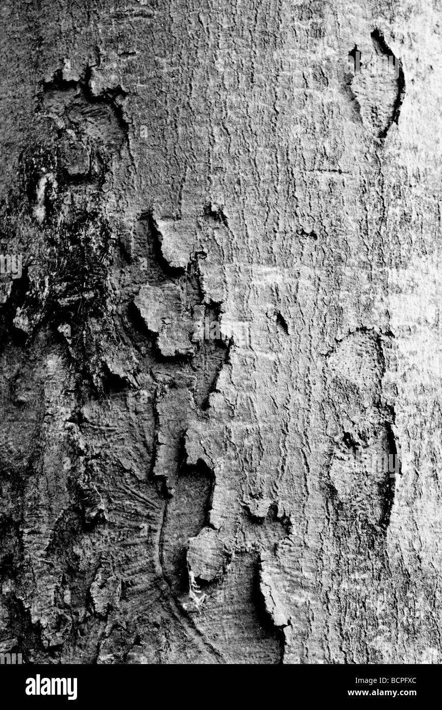 detail image of a tree curst, converted in black&white - Stock Image