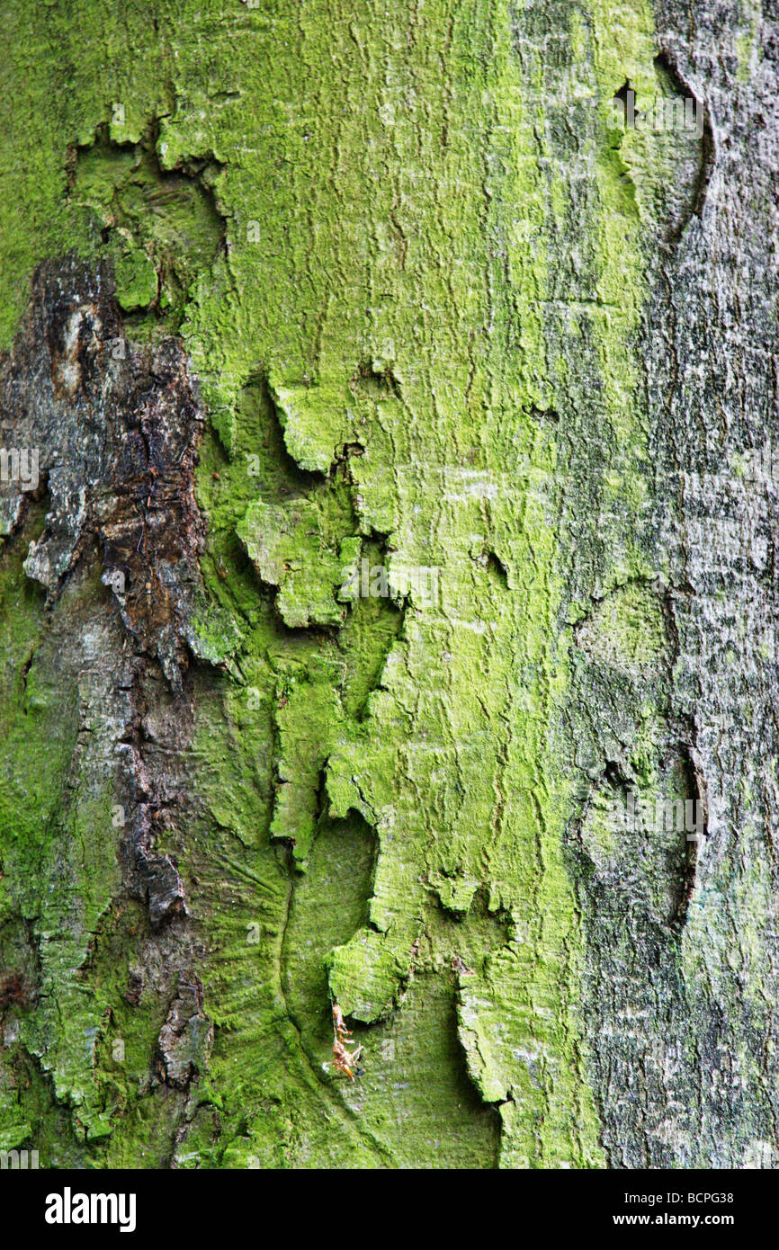 detail image of a tree curst - Stock Image