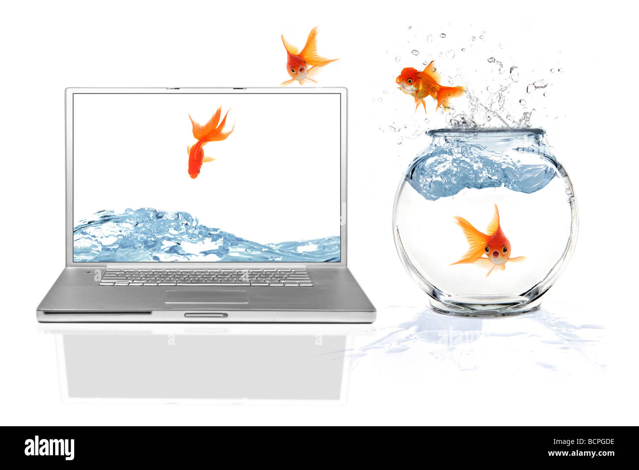 Aquarium Fish Online Stock Photos Aquarium Fish Online Stock